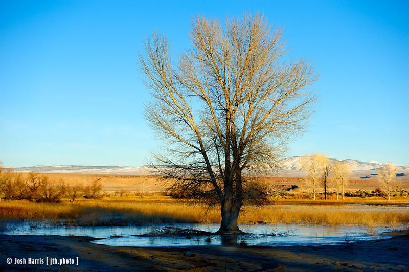 Farmer's Pond, Bishop, January 2017.