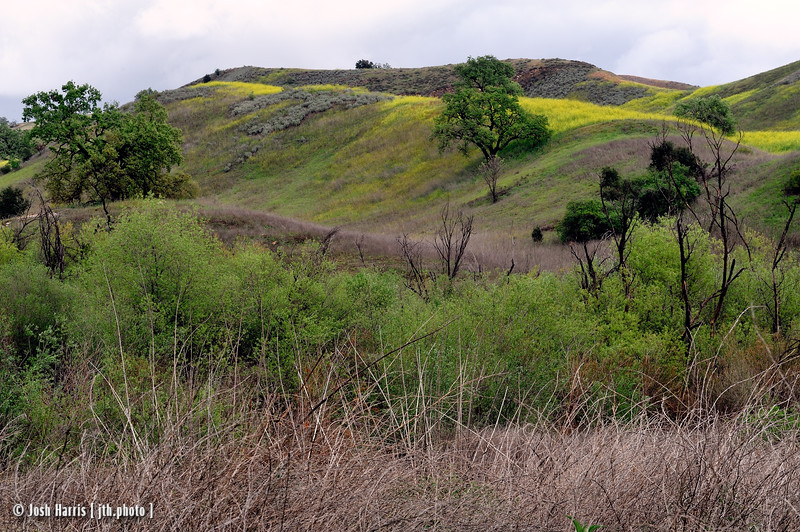 Las Virgenes Trail, Calabasas, April 2012.