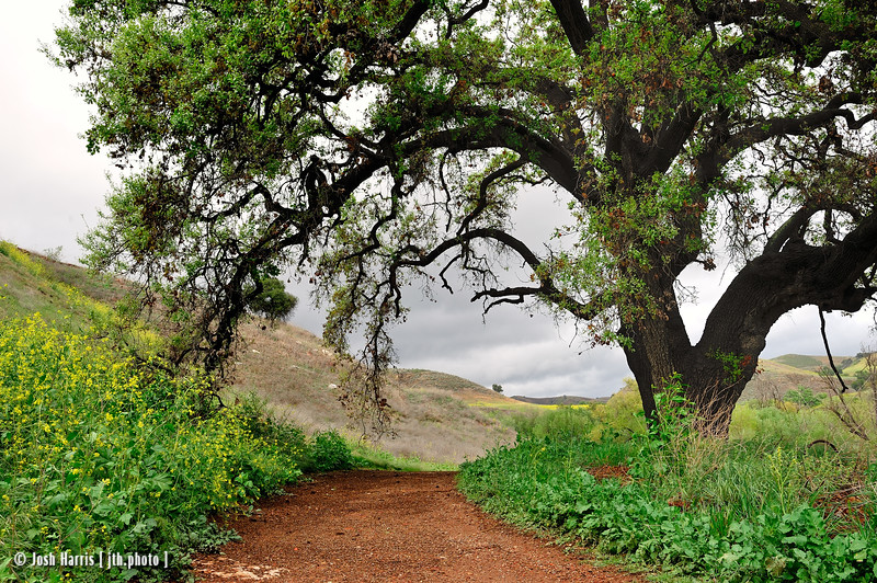 Las Virgenes Trail, Calabasas, April 2012.