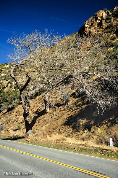 HIghway 33, Los Padres National Forest, December 2010.