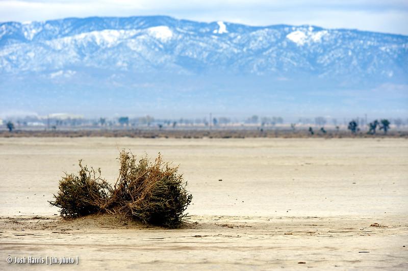 El Mirage, California, Mojave Desert, November 2013.
