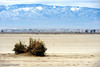 El Mirage, California, Mojave Desert, November 2013.