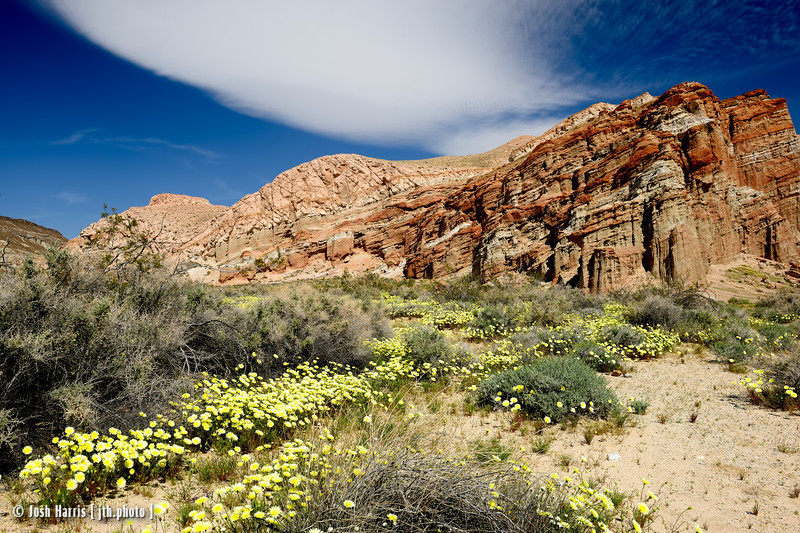 Red Rock Canyon, March 2015.