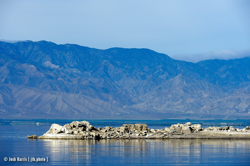 North Shore, Salton Sea, March 2014.