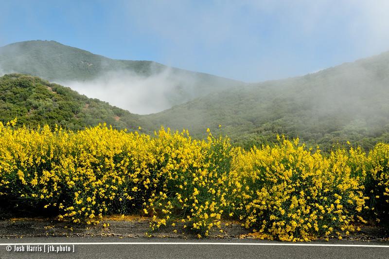 Highway 33, Los Padres National Forest, June 2012.