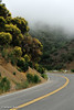 Highway 33, Los Padres National Forest, June 2012.