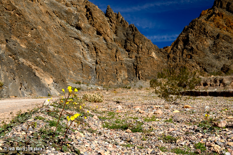 Titus Canyon, Death Valley, February 2016.