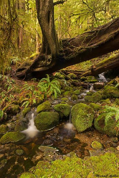 Avatar Grove,Port Renfrew,B.C.