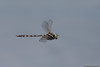 Lancer Dragonfly