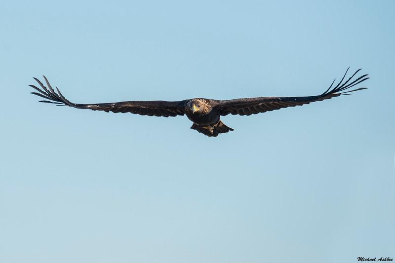 Golden Eagle,Vancouver,B.C.