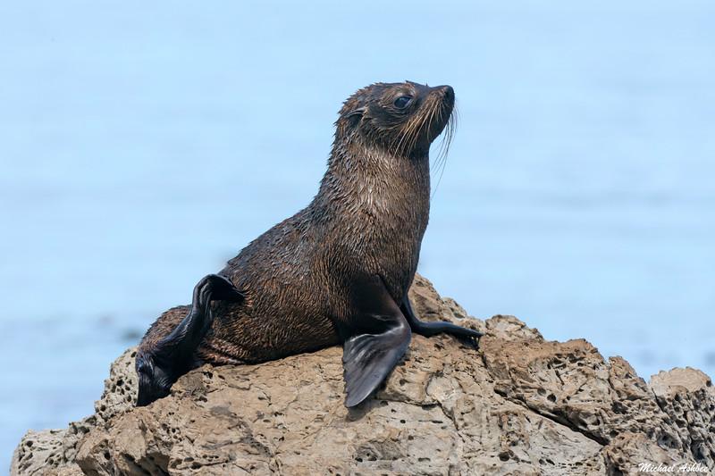 New Zealand Furl Seal