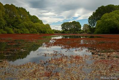 The Groynes Wetlands