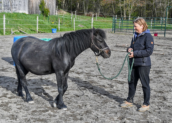 """<div class=""""jaDesc""""> <h4>Love with Owner Melody - May 9, 2017</h4> <p>Love is very low key as she stands calmly with Melody.  It is not obvious that it is only a few weeks till she has her baby.</p> </div>"""