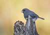 "<div class=""jaDesc""> <h4>Junco on Stump - November 10, 2017</h4> <p>We usually have a few pairs of Juncos hang around all summer.  As the weather turns colder more move in from up north.  We are now up to about a dozen.</p> </div>"