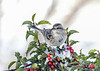 "<div class=""jaDesc""> <h4>Tree Sparrow Front View - January 30, 2021</h4> <p></p> </div>"