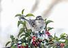 "<div class=""jaDesc""> <h4>Tree Sparrow Front View - January 30, 2021</h4> <p></p> </div>"