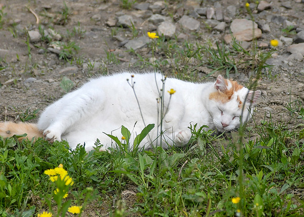 """<div class=""""jaDesc""""> <h4> Turbo Taking a Nap - June 4, 2018</h4> <p>While we were working with the horses in our arena, Turbo found a spot to take a nap.</p> </div>"""