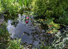 """<div class=""""jaDesc""""> <h4>Lower Pool in Second Pond Off Side of House - August 8, 2020</h4> <p>I love the sound of running water.</p> </div>"""