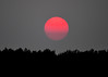 "<div class=""jaDesc""> <h4> Vivid Red Sunset - September 4, 2017</h4> <p>Not sure we have ever seen a sunset as vivid red as this one.  I caught it moving through a haze layer on the horizon.</p> </div>"