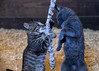 """<div class=""""jaDesc""""> <h4> Sable and Scarlett Playing with Toy Rope - September 9, 2017 </h4> <p>I had endless fun watching the kittens play.  This toy rope was one of their favorites.</p> </div>"""