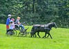 """<div class=""""jaDesc""""> <h4>Carriage Ride Through Field - August 26, 2018</h4> <p>Melody's Dartmoor ponies, Shadow and Moor, are a beautifully matched pair.</p></div>"""