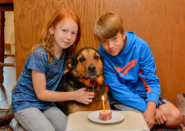 """<div class=""""jaDesc""""> <h4> Coby's 10th Birthday - August 11, 2018 </h4> <p>It is hard to believe we rescued Coby 9 and 1/2 years ago.  He is tolerating the photo shoot with Camille and Colin.  He just wants his marrow bone. </p> </div>"""