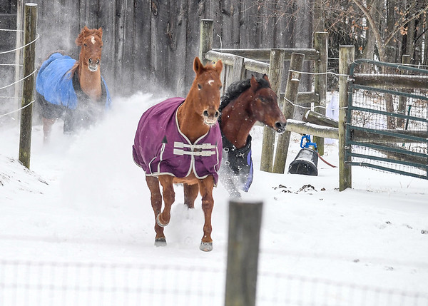 """<div class=""""jaDesc""""> <h4> Horses Decide to Play - January 13, 2018</h4> <p>Two weeks later, it was a cold, windy, snowy day and the horses were feeling frisky.  They came racing at full speed out of the back paddock.</p> </div>"""