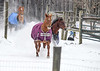 "<div class=""jaDesc""> <h4> Horses Decide to Play - January 13, 2018</h4> <p>Two weeks later, it was a cold, windy, snowy day and the horses were feeling frisky.  They came racing at full speed out of the back paddock.</p> </div>"