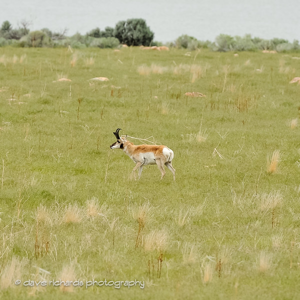 Antelope-Island-RR 2016-999