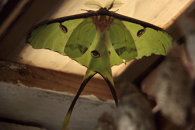 new Butterfly Festival 2011