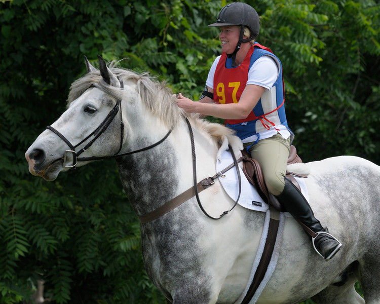 An Eventing Draft Horse