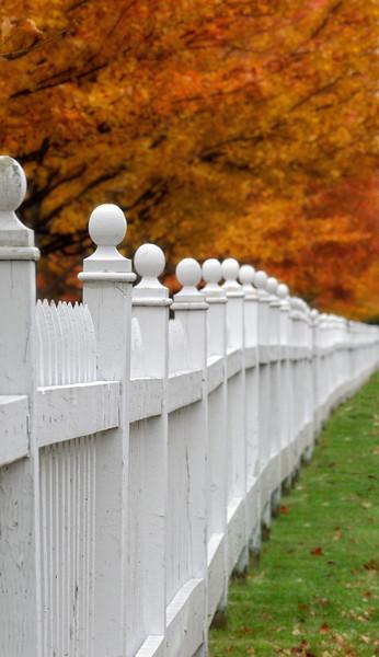 Autumn Fence Line