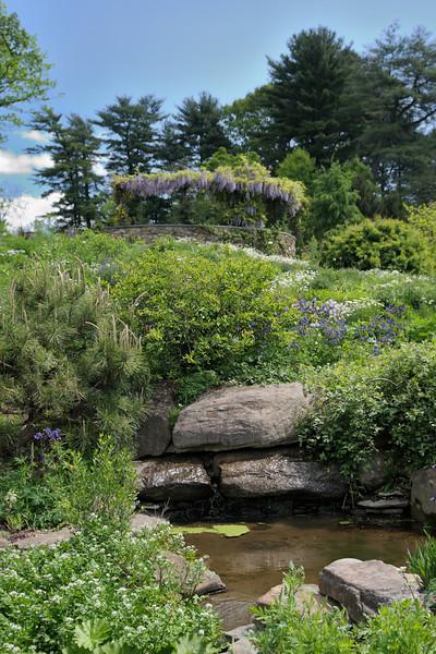 Pond Garden View