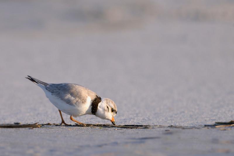 Pecking Around