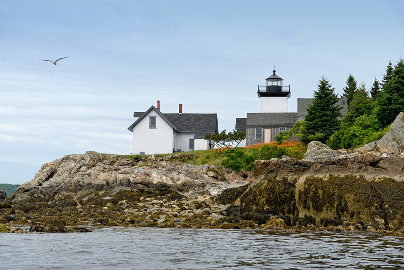 Indian Island Lighthouse with Flying Gull