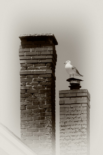 Two Chimneys and a Gull