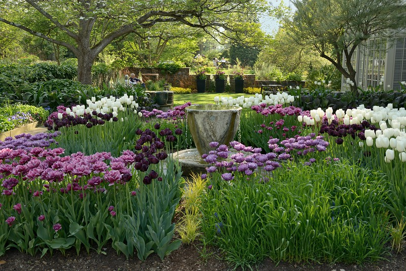 Teacup Garden at Chanticleer