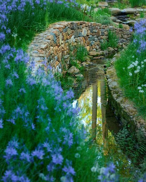 Quamash Along the Creek