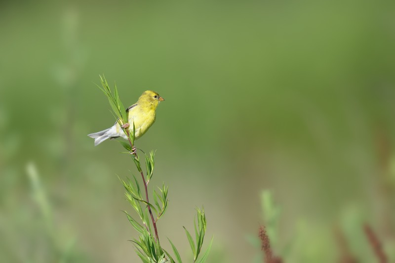 Goldfinch: Rise up this mornin' smiled with the risin' sun