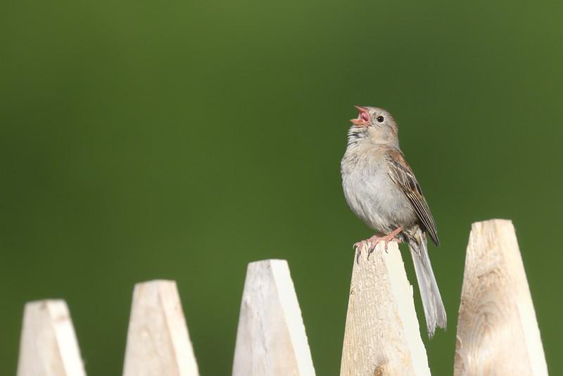 One bird sitting on a fence...