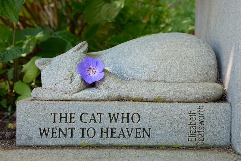 Sweet Eternal Feline Dreams