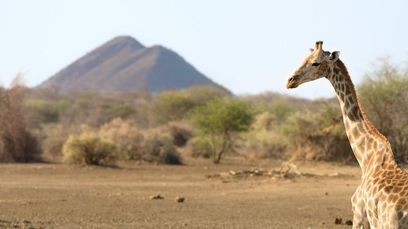 Giraffe and Extinct Volcanoes
