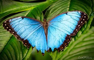 Rainforest Butterflies & Frogs