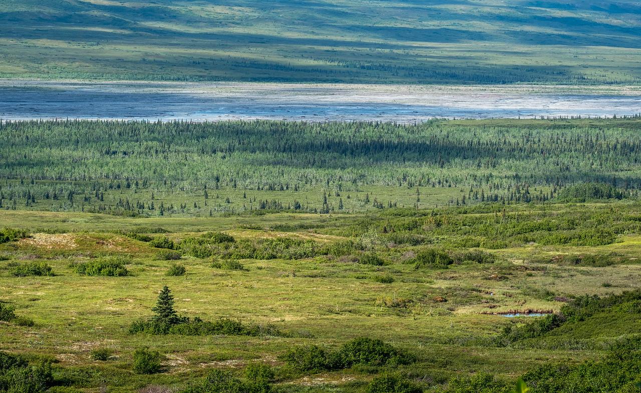 Tundra 1,  Denali National Park