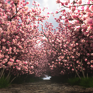 Beautlful pink trees