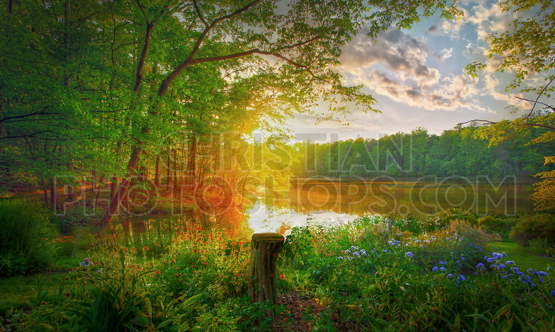 Sunset with lake and flowers
