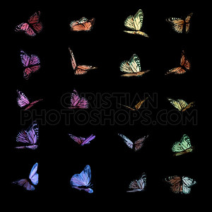 Colorful butterflies on black