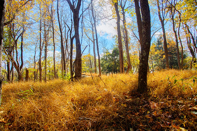 Forest in the fall