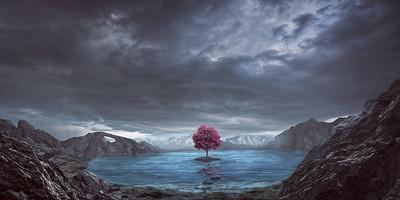 Single tree and lake