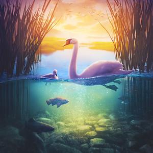 Swan family at the lake